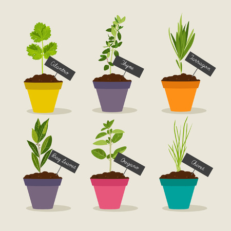 tarragon: Herb garden with pots of herbs set 2, vector illustration