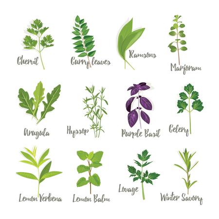 Set of herbs 2  isolated, vector illustration Vettoriali