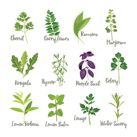 Set of herbs 2  isolated, vector illustration Ilustração