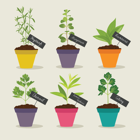 Herb garden with pots of herbs set 3, vector illustration