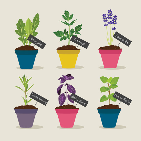 Herb garden with pots of herbs set 4, vector illustration Illustration
