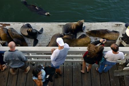 sightseers: Sightseers stand on a dock in Santa Cruz, California, watching a group of harbor seals sunbathing