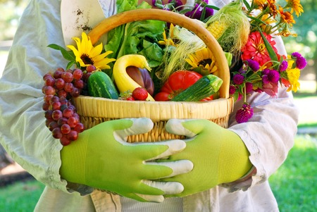 bountiful: Gardener holding a wicker basket filled with fruits, vegetables and flower fresh from the garden