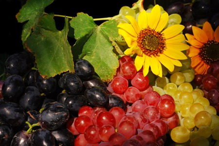 Three varieties of grapes with a vine and sunflowers lit by the late afternoon sun (part of a series) photo