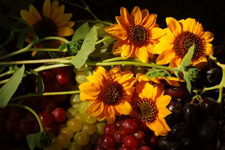 Bunches of grapes and sunflowers in a vintage wooden fruit box picked fresh from the garden (part of a series) Stock Photo - 1545661