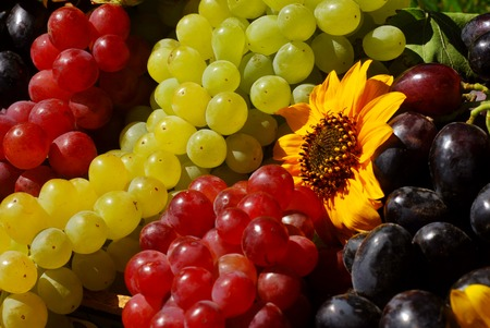 Bunches of grapes and sunflowers in a vintage wooden fruit box picked fresh from the garden (part of a series) photo