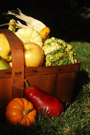 dried gourd: Vintage wooden fruit basket filled with autumn fruits and vegetables outdoors in sunlight