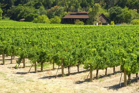 Rustic vineyard and winery located in Napa Valley, California Stock Photo