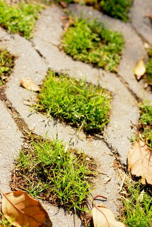porosity: Turf stone used to pave a residential driveway