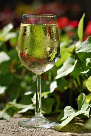 pinot grigio: Glass of white wine set in a tropical garden
