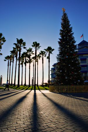 Cluster of palm trees and a Christmas tree casting shadows from the sun, Jack London Square, Oakland, California photo