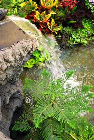 Young fir tree and waterfall in home backyard garden