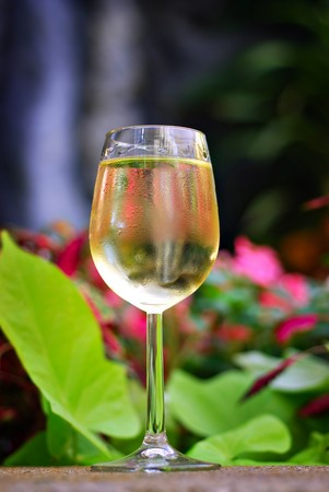 pinot grigio: Glass of white wine set in a tropical garden with waterfall