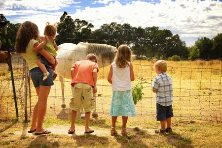 Five caucasian children visiting injured horse on farm photo