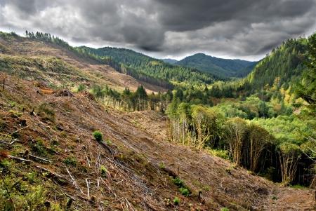 폭풍우가 많은 오레곤 산 계곡에서 벌목 료 벌채 작업