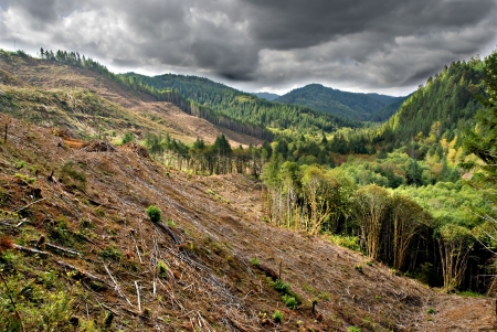logging: Clear cut logging operations in stormy Oregon mountain valley