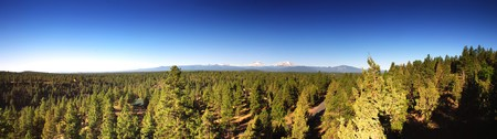 View above the treeline of the Three Sisters Mountains