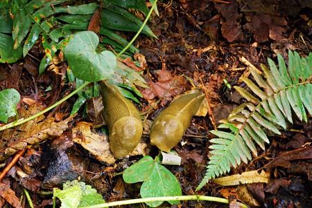 젖은 숲 바닥에 함께 두 slugs 스톡 콘텐츠