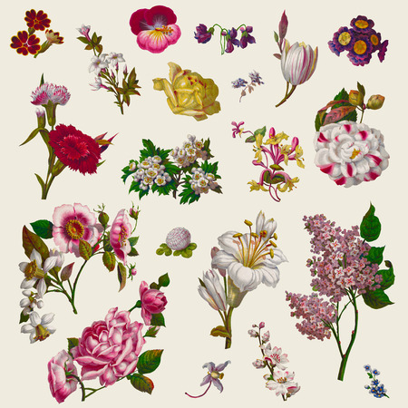 Vintage Victorian Flowers Clip Art.  Source: Harrisons Perfumery Advertisement, c. 1854,  US Library of Congress photo