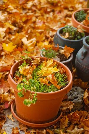 greek pot: Vasi di erbe raccolte circondata da foglie di autunno