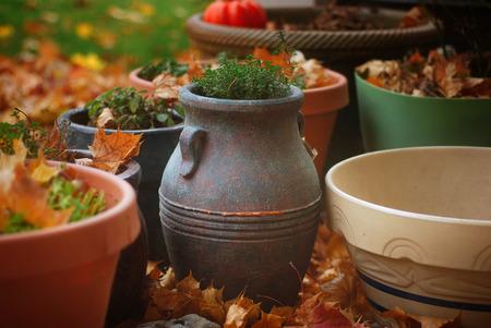greek pot: Vaso di timo con erbe e foglie d'autunno