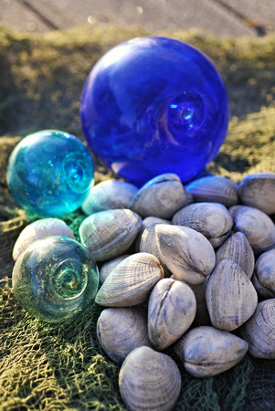 fishing floats: Fresh clams on netting with antique glass fishing floats in sunlight