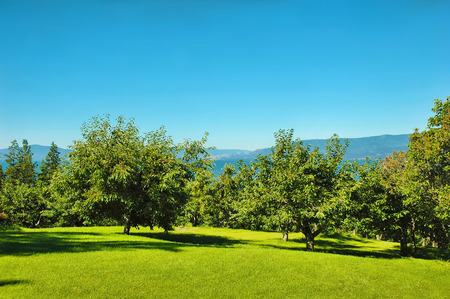 flathead: Cherry orchard overlooking Flathead Lake in Montana