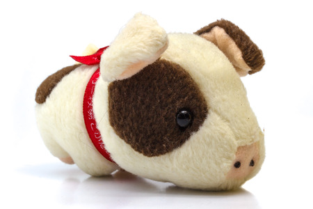 pig out: Soft Toy Piggy on Isolated White Background
