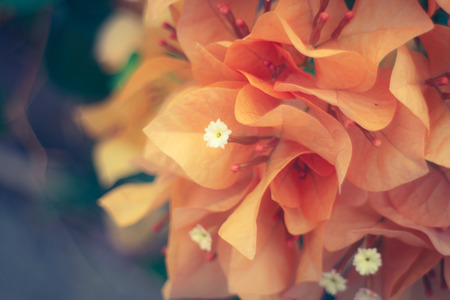 organe flower color vintage style, blur and soft photo 스톡 콘텐츠