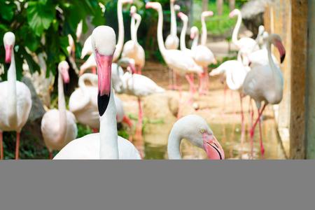 flamenco ave: pájaro flamenco rosado en zoológico foto de stock Foto de archivo
