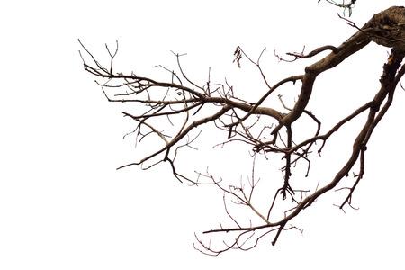 Halott fa elszigetelt fehér háttér