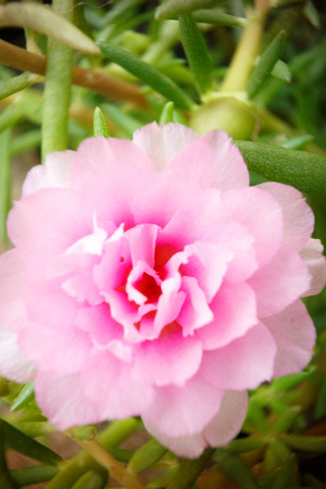 close up image: close up image pink flower on natural background photo