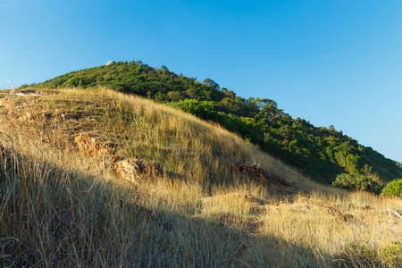 judean hills: tree on hill with clear blue sky natural background
