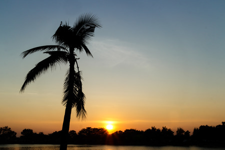 gloaming: Silhouette of coconut palm tree on colorful sky Stock Photo