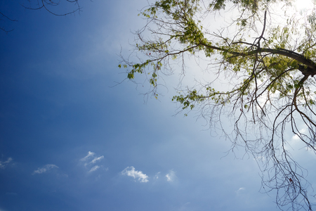 tree and blue sky and white cloud, natural for background Stock fotó