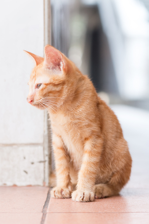close up cute orange cat looking somthing