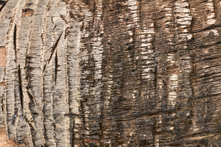 close up wooden texture for natural background Stock fotó