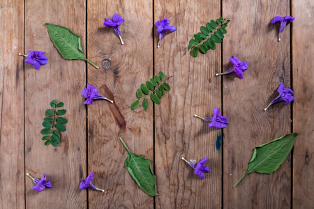 purple flower and green leaf on wooden ground Stock fotó