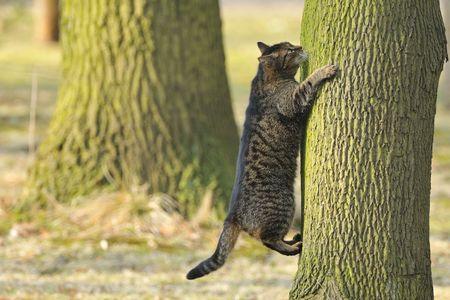 A cat climbs a tree. Standard-Bild