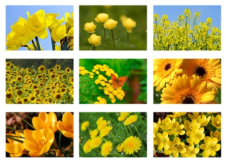 Flower collage , with yellow flowers. Stock Photo - 11398814