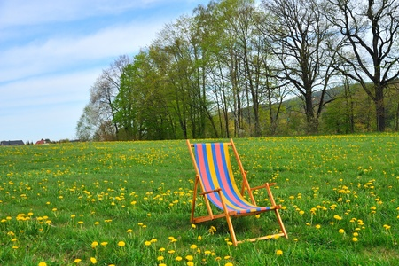 Deck chair in the garden with yellow flowers  photo