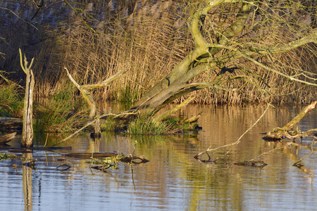Floodpain in autumn in the morning sun