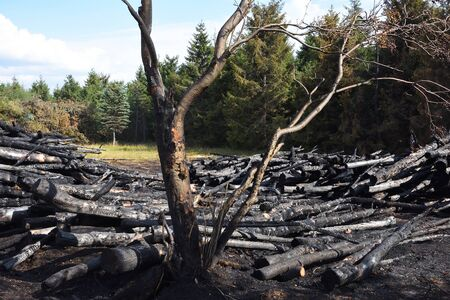 Arson on a forest edge