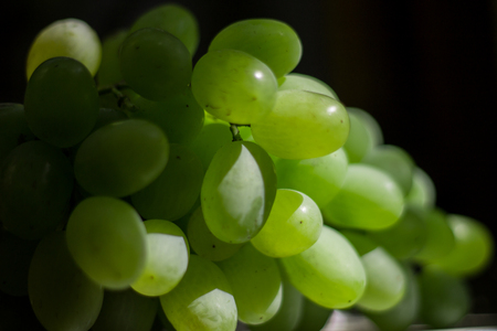 white grapes on a background of green leaves Standard-Bild