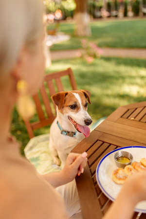 Dog watch a woman eat in the open air. The dog begs for food