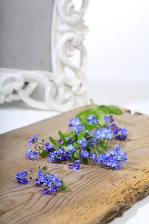 pflanzen: Stillleben mit Vergissmeinnicht