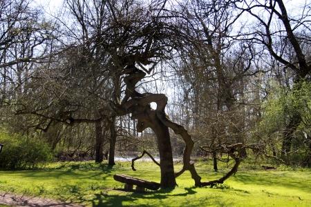 ash tree: frassino
