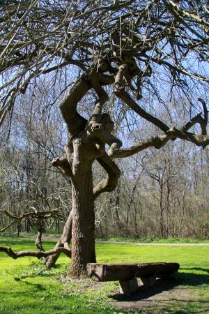 ash tree: ash tree