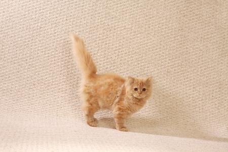 mohair: mohair cat