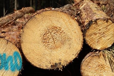 trunk  tree: tronco de �rbol Foto de archivo